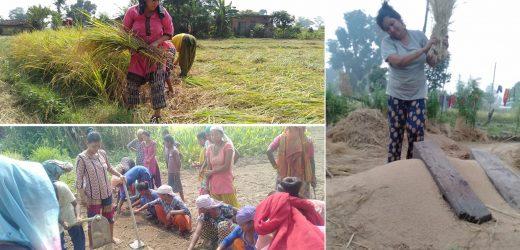 अखिल नेपाल महिला संघ (क्रान्तिकारी)द्वारा जनश्रम अभियान सञ्चालन